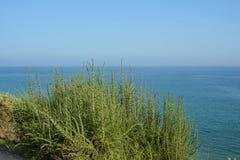 Green bush against the blue sky Stock Image