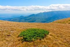 Green bush on autumn meadow in mountains Royalty Free Stock Photos