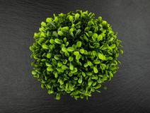Green bush on black. Green bush isolated on a black background stock photos