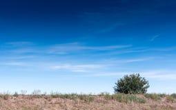 Green bush and blue sky. Green bush against the blue sky stock photos
