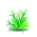 Green bush, cartoon on white background. Vector Stock Photography