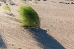 Green bush in the desert Stock Images