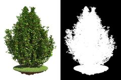 Green Bush with Detail Raster Mask. Stock Photography