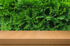 Green bush and empty wooden table royalty free stock image