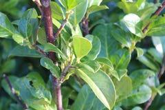 Green bush. Enjoying the last warm moments from the sun royalty free stock image