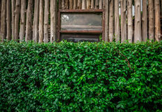 The green bush with a eucalyptus wood fence behind with the rust Royalty Free Stock Photography