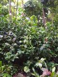 Green bush. Flower, garden, tree stock photo
