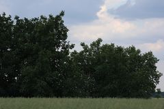 Green bush. And green grass landscape royalty free stock photos