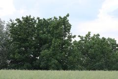 Green bush. And green grass landscape royalty free stock image