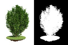 Green Bush with green grass on White Background. Royalty Free Stock Images