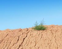 Green bush grows on dry ground Stock Photo