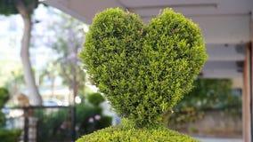 Green bush in heart shape standing stock footage