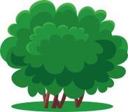 Green bush. The green bush is  illustration Royalty Free Stock Image