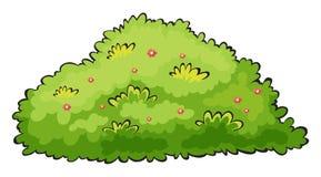 Green bush. Illustration of a green bush on a white background stock illustration