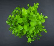 Green bush on black. Green bush isolated on a black background royalty free stock photo