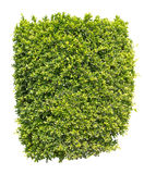 Green bush isolated Royalty Free Stock Images