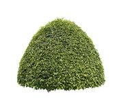 Green bush isolated Royalty Free Stock Photography