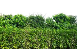Green bush isolated on white background. Beauty environment stock photos