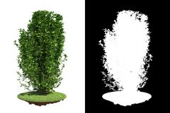 Green Bush Isolated on White Background. Stock Image