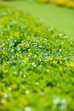 Green bush and lawn background Stock Photography