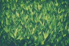 Green bush leaves Stock Photo