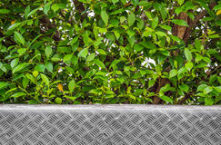 Green bush with metal diamond plate texture Stock Photography