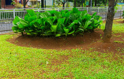 Green bush in the middle of grass field photo taken in Jakarta Indonesia Royalty Free Stock Photos
