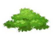 Green bush nature. Cartoon bush illustration. Nature element for landscape design royalty free illustration