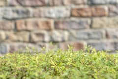Green bush near blurred brick wall