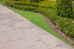 Green bush in the park Royalty Free Stock Photos