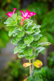 Green bush with red flowers. Light day royalty free stock photos