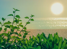Green bush with sand and sea behind Stock Photo