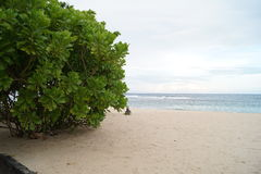 Green bush on a sandy beach on a cloudy day Stock Photos
