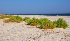 Green bush on the sea beach sand. Selective focus on the bush. Stock Photos