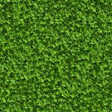 Green Bush. Seamless Texture. Royalty Free Stock Image