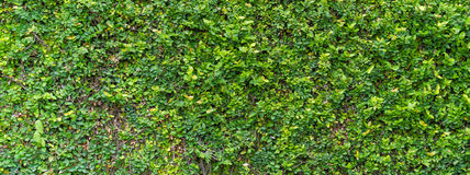 Green Bush Seamless Tileable Texture Stock Photography