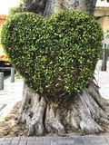 Green bush in the shape of a heart on a tree trunk.  stock image