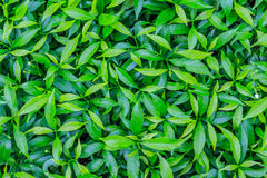Green Bush Stock Photo