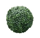 Green bush sphere isolated on white background photo.  Royalty Free Stock Image