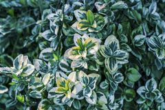 Green bush toned background. Image of green bush toned background photo royalty free stock image