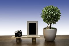 Green bush tree in white flowerpot with Photo Frame and Camera royalty free stock photography