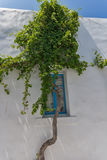 Green Bush on Typical white house in town of Naoussa, Paros island, Greece Stock Photo