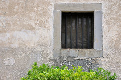 Green bush under window of aged house Royalty Free Stock Image
