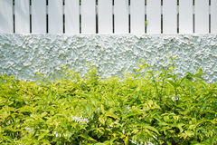 Green bush with white fence Stock Image