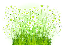 Green bush with white flowers Royalty Free Stock Images
