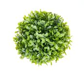 Green bush on white. Green bush isolated on a white background royalty free stock photo