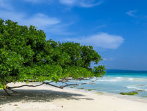Green bush on a white sand beach and turquoise. Green bush on a white sand beach and turquoise sea at Havelock Island, Andamans, India. Turquoise sea landscape Royalty Free Stock Image