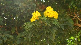 Green Bush with yellow flowers swaying in the wind. Beautiful green Bush with yellow flowers swaying in the wind stock video