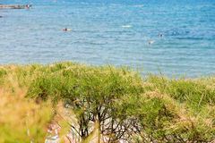 Green bushes and blue sea behind, Istria, Croatia Stock Images