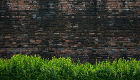 Green bushes and brick wall Royalty Free Stock Photos